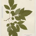 Több fa - nagyobb egészség