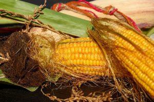 kukorica bajusz
