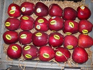 bio alma, ökológiai, alma gyógynövény