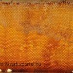 Mézgyógyászat – az ősi népi gyógyító receptek tárháza