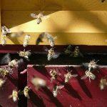 Mire jó méz ? - Meglepő felhasználási módok