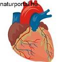 Szívbetegségek megelőzése természetesen