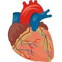 A kalciumcsatorna-blokkolót szedők körében növekszik a szívroham kockázata