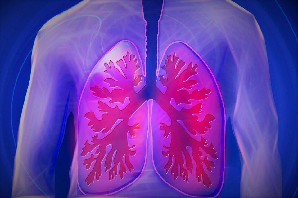 tüdő, asztma
