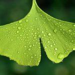 Gyógynövény kvíz - Melyik betegségre milyen gyógynövény jó? Kezdő kvíz.