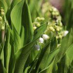Mérgező növények a környezetedben - kvíz
