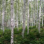 Új stratégia az erdők védelme és helyreállítása érdekében