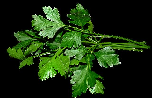 petrezselyem, gyógynövény kvíz, afrodiziákum, petrezselyem gyógyhatása