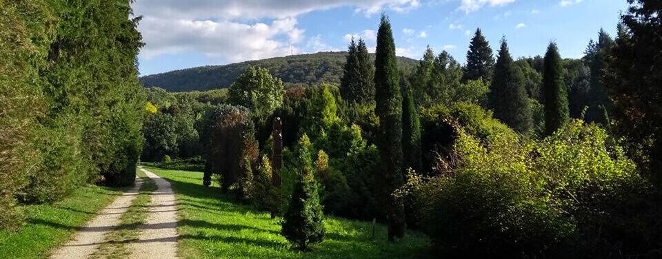Agostyáni Arborétum, gyógynövényes látnivalók
