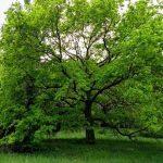 Agostyáni Arborétum - a gyógynövényes látnivaló