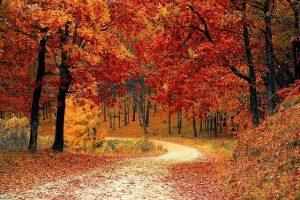 ősz, erdő, erdőfürdő