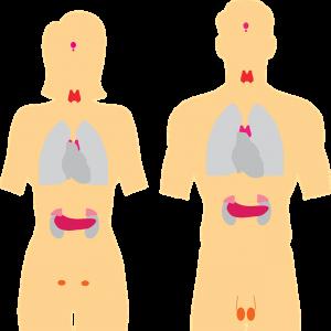 pajzsmirigy alulműködés tünetei