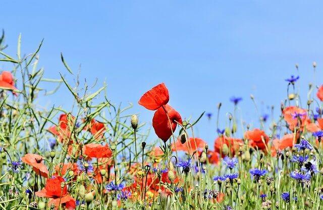 talajtakaró virágok, rét