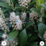 A legjobb növényfelismerő applikációk