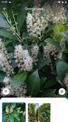 növényfelismerő applikáció Google Lens