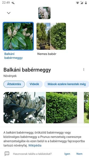 növényfelismerő applikáció