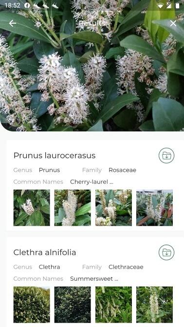 növényfelismerő applikáció LeafSnap