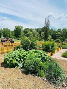 Gyógynövénykert Ábrahámhegy, Salföld Fűszer- és Gyógynövénykert