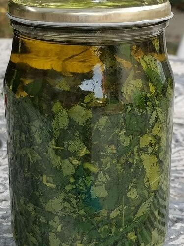Mire jó a diófa levele? A diólevél olaj és a diófa olajas szappan készítése