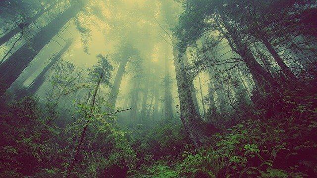 erdőfürdőzés
