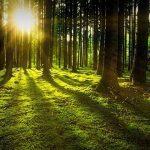 Mi fán terem az erdőfürdőzés?