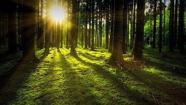 erdőfürdőzés, gyógynövényes erdei elvonulás, természet