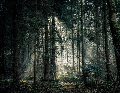 Mi történik egy erdőfürdő során?