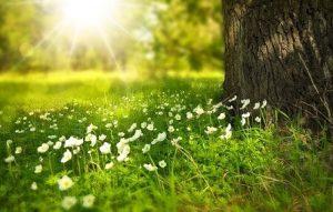 Berczik Ágnes, gyógynövény túra, természet