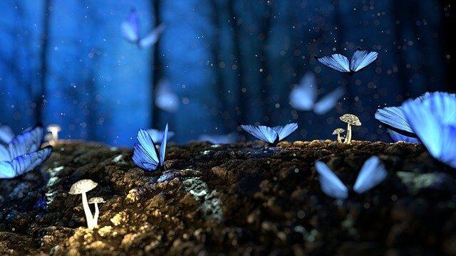 a vonzás törvénye, álom, erdő, állatok, pillangó, lepke