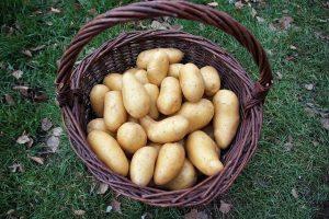 töltött krumpli