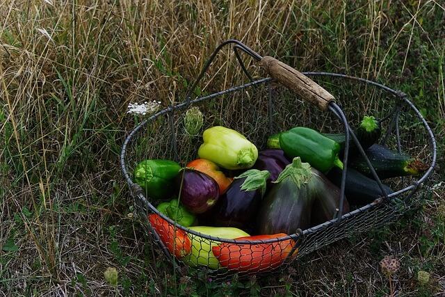 padlizsán, paradicsom, zöldségek, cukkini, paprika, kosár, bio